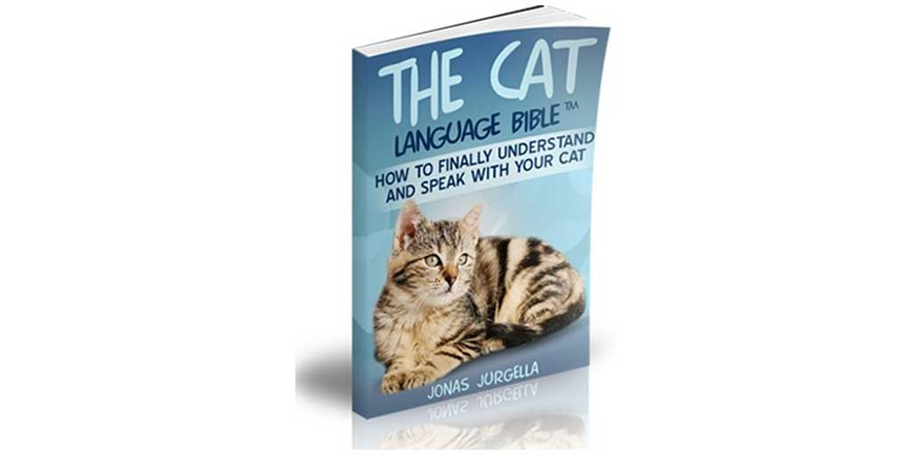 How to Finally Speak With Your Cat! – Jonas Jurgella's Cat Language Bible