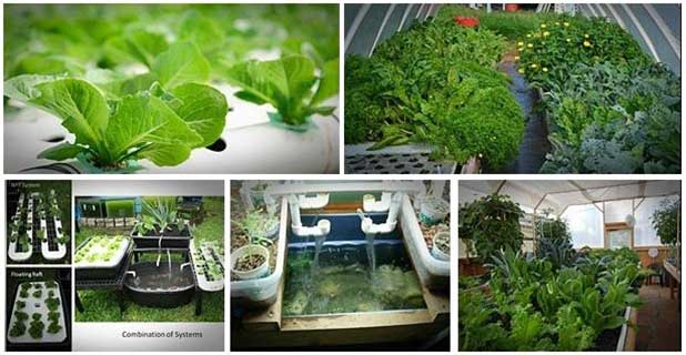 How to Build Cheap Aquaponics System on your Backyard Easily...